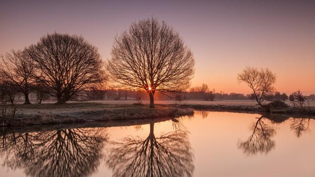 Landscape pond tree