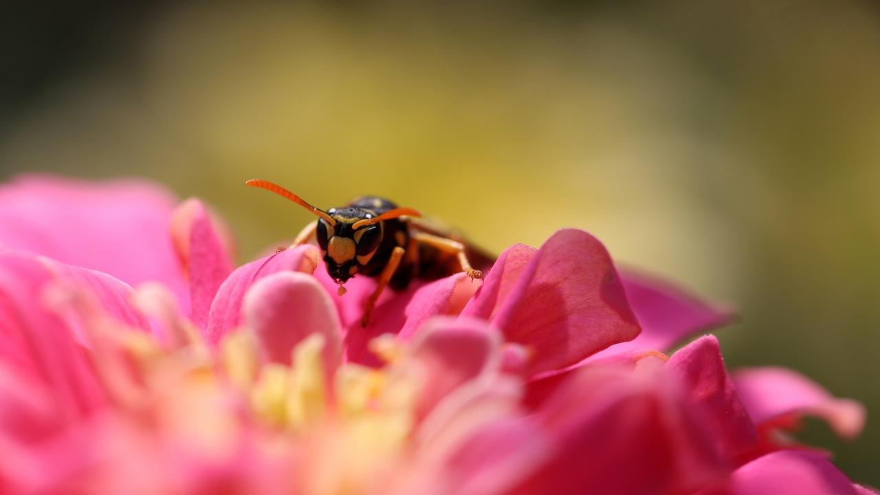пчела цветы розовые flowers pink bee  № 910809 без смс