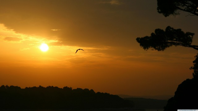 Sunset bird sky