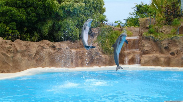 Dolphin animal sea
