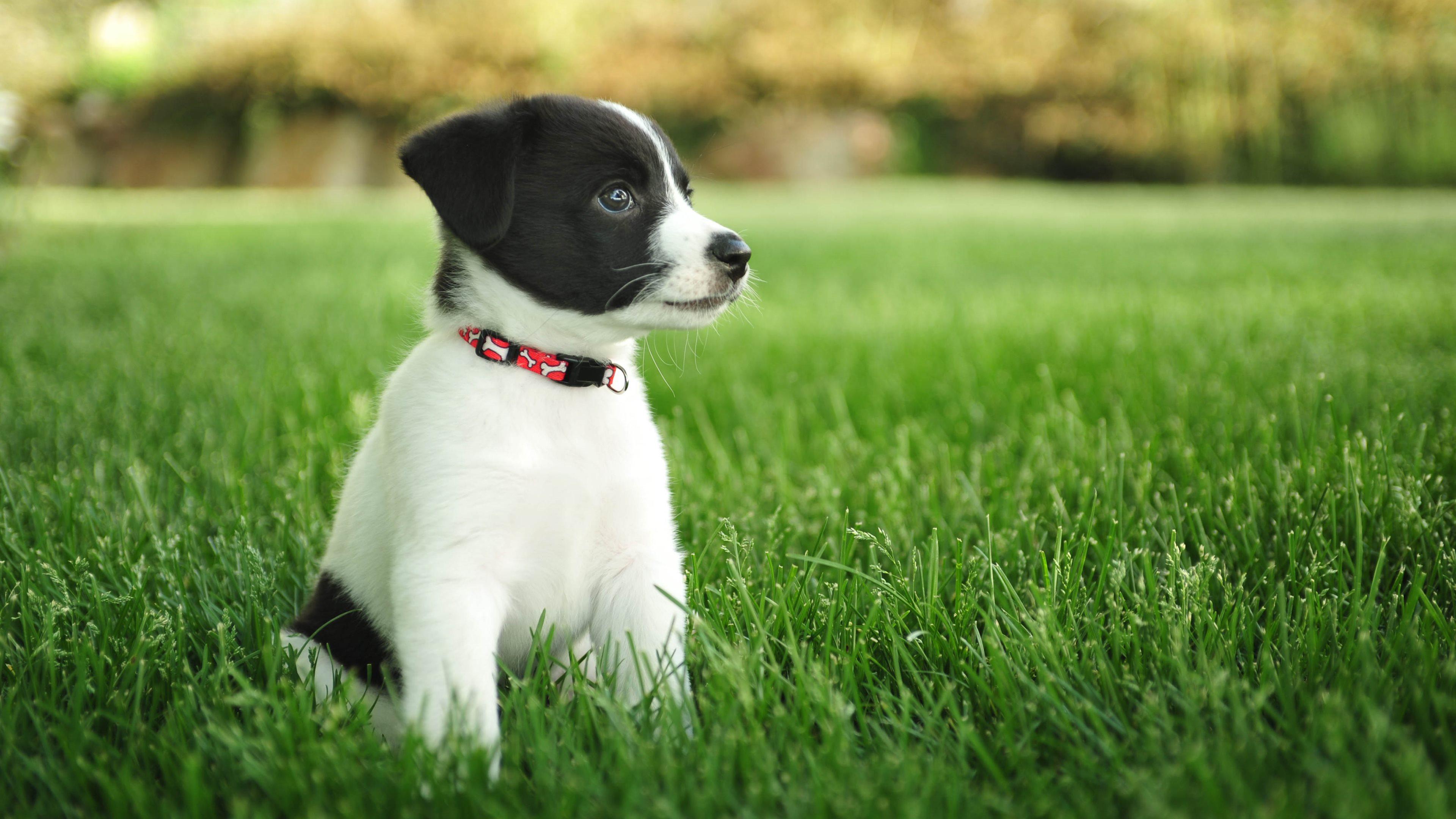 動物犬 4k壁紙 Com