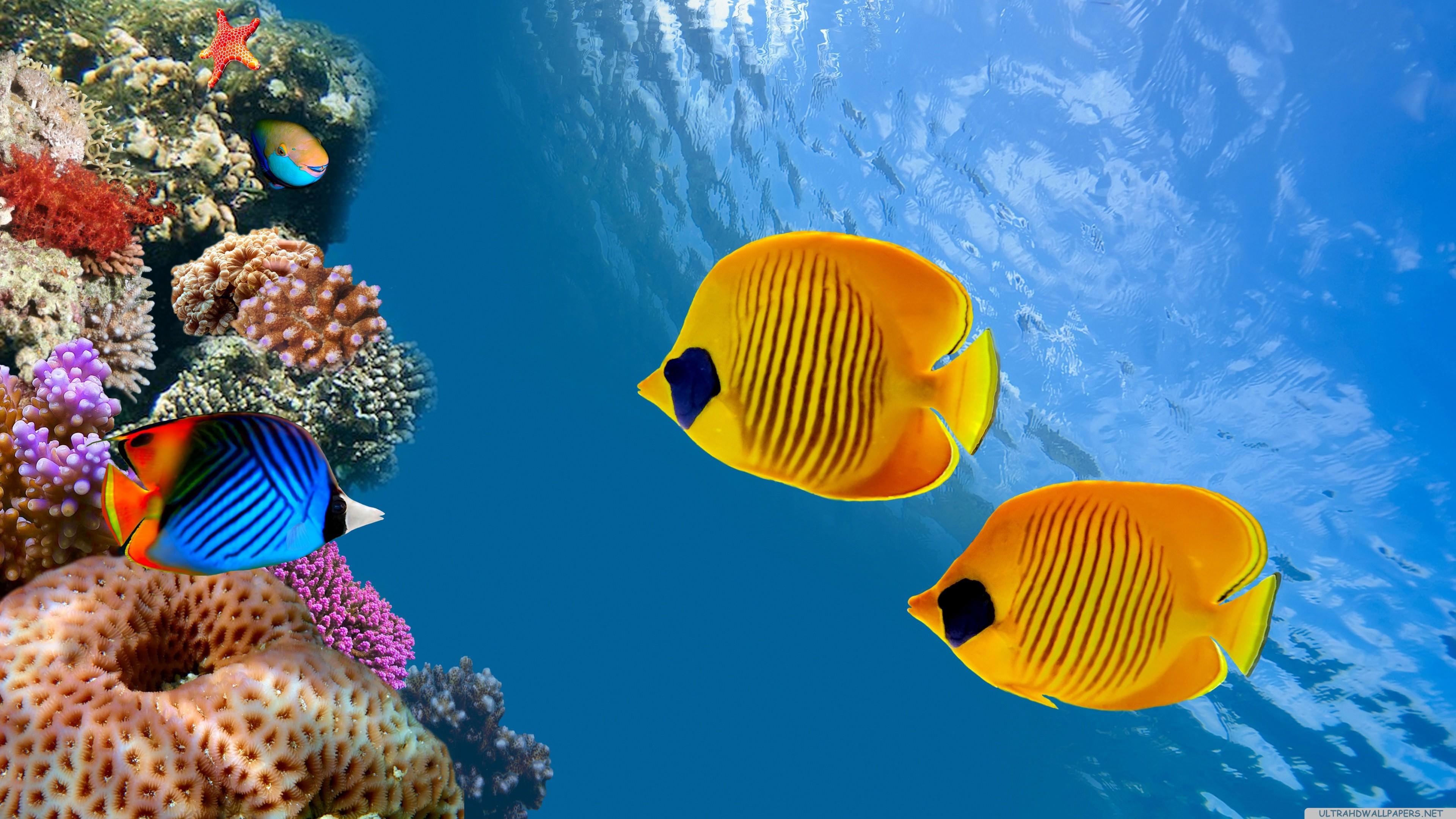 Sea Coral Blue Tropical Fish