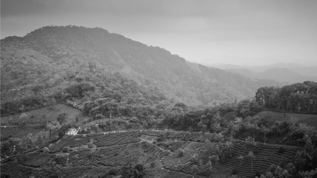 Landscape monochrome