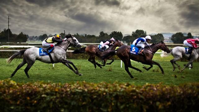 Horse animal race
