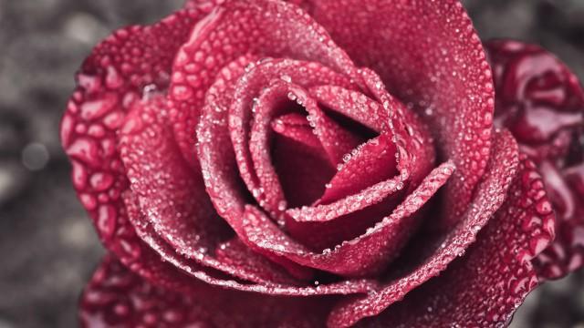 Rose Hanaaka