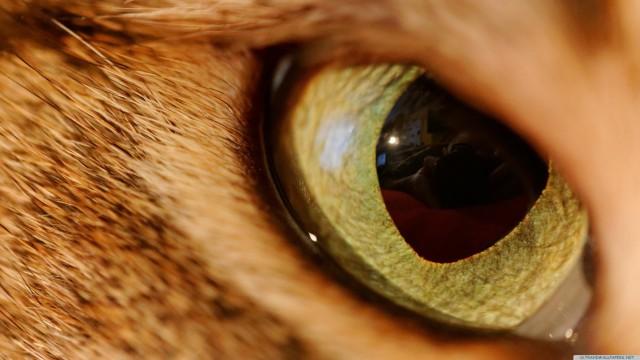 Eye animal close-up