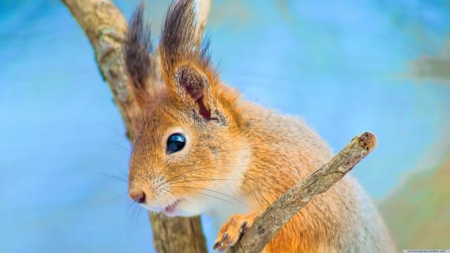 Cute squirrel animal