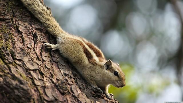 Squirrel tree animal blur