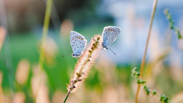 風景自然虫蝶