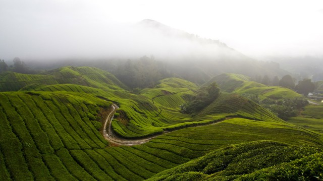 風景緑山雲