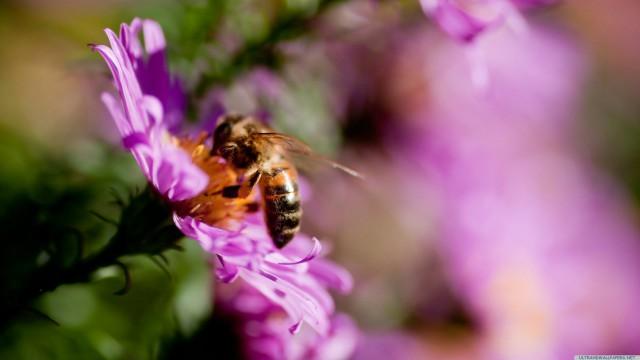 花ハチぼかし接写