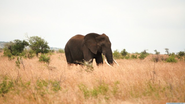 ゾウ動物自然