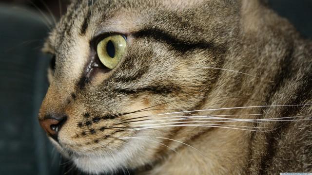 猫接写動物