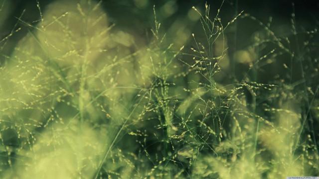 葉ぼかし緑接写
