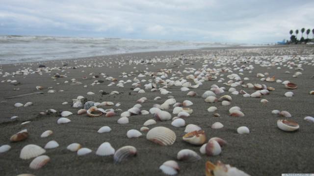 貝殻砂浜空