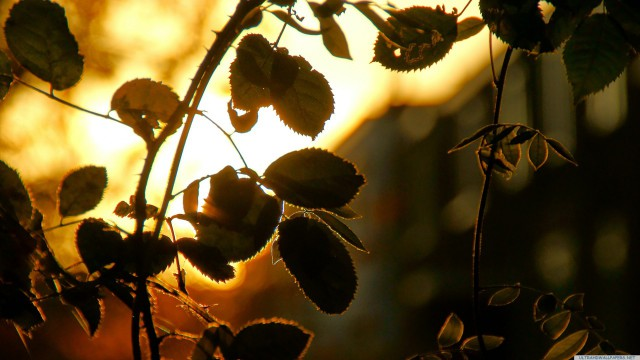葉自然夕日緑