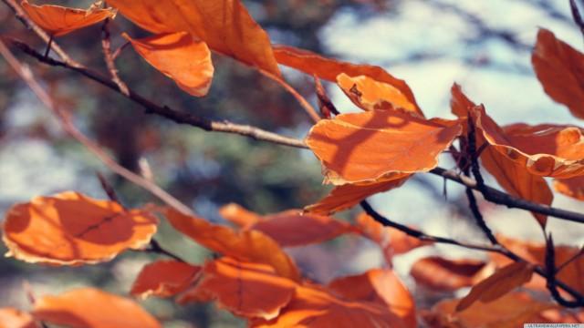 枯葉接写橙